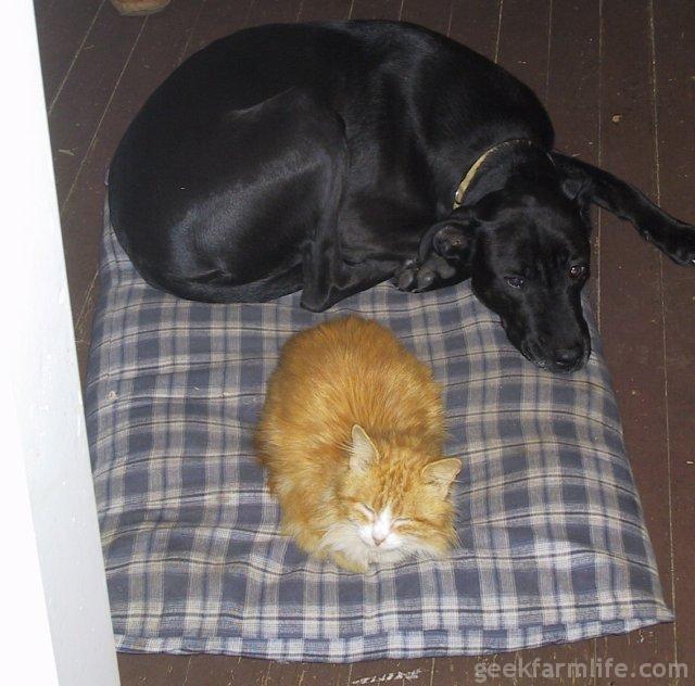 Cat+Dog